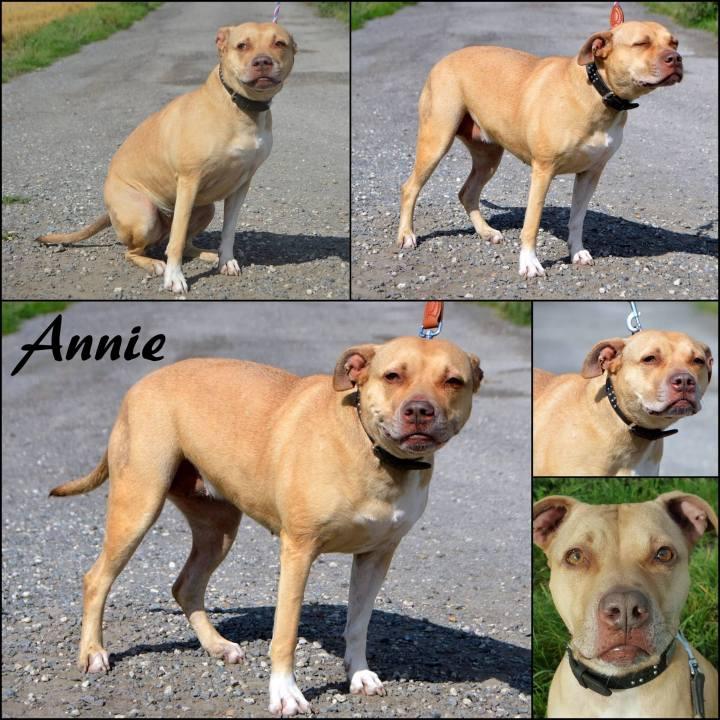 Annierescue